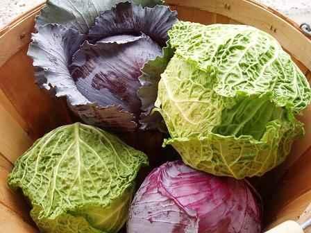Trái cây và thực phẩm là bí quyết giảm cân hiệu quả