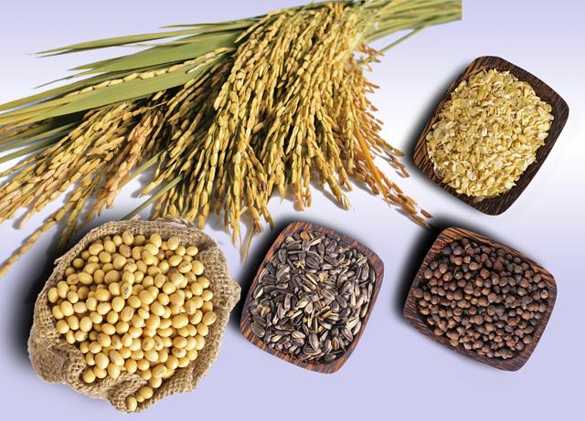 Giảm cân nhanh và hiệu quả bằng ngũ cốc nguyên hạt